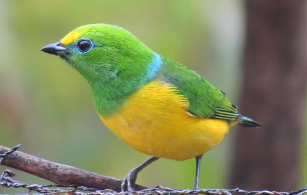 Birding Colombia: An Endemic Exploration