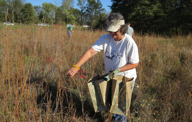 Volunteers Help Seed the Future of Arkansas's Prairies