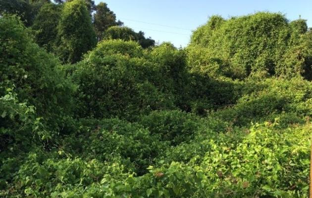 Fighting Invasives Along Fourche