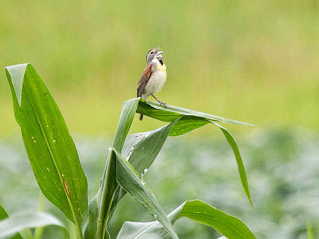 Audubon Arkansas Launches Community Science Dicamba Damage Monitoring Program