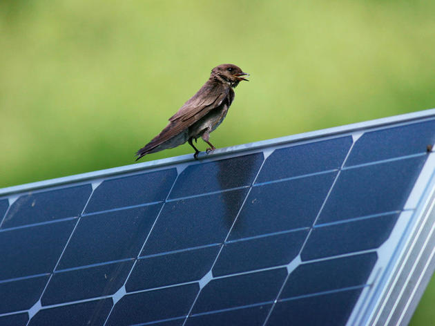 Audubon Arkansas to become first 100% Renewable Powered Nonprofit in Arkansas