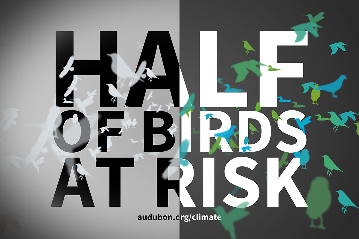 Birds and Climate: Half of Species at Risk