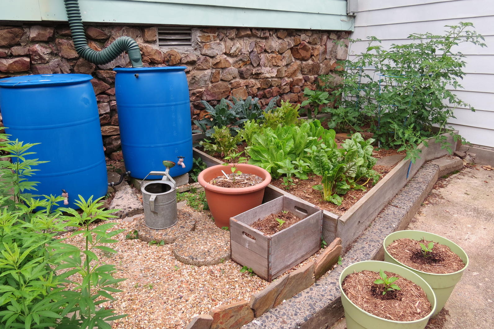 Rain Barrels Store For Use In Your Garden. Photo: Dan Scheiman